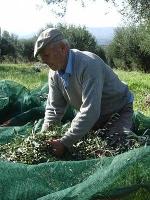 Ioannis Drinis, 2009 in Unesco ICH website